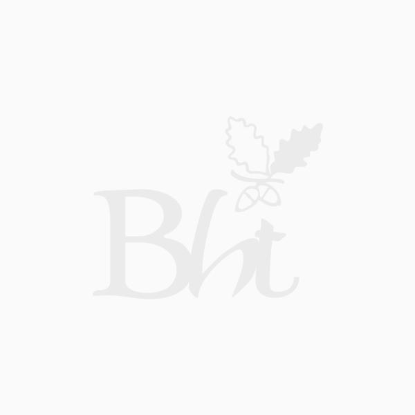 Lonicera nitida - Boxleaf Honeysuckle