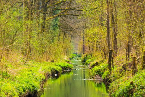 Creating Woodlands for Flood Alleviation | Woodlands for Water 2019