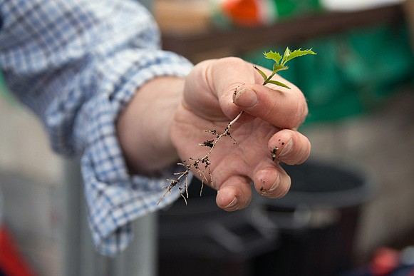 BHT adds UK Sourced and Grown (UKSG) assurance to its supply of bare root plants