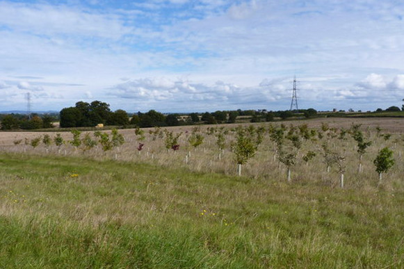 Apply for Countryside Stewardship now | Higher Tier 2020